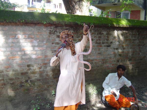 Pouliční zaklínač hadů - předváděčka u hotelu.