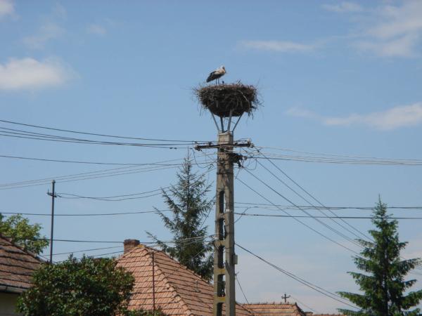 Čapích hnízd tu začíná být požehnaně a čápi jsou opravdičtí.
