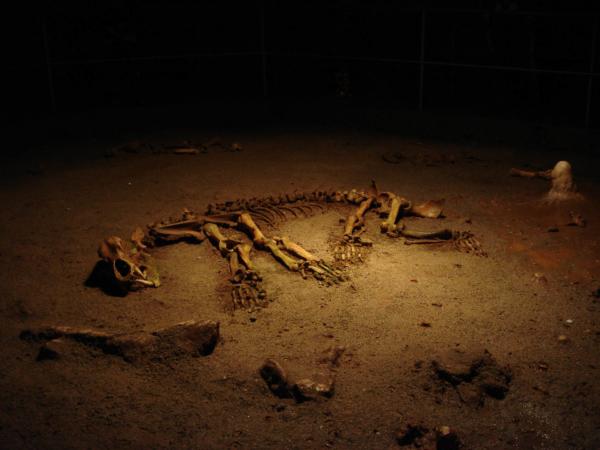 do níž otvorem na povrchu spadl medvěd a už se odtamtud nevyškrábal ven.