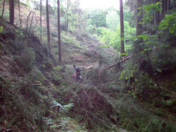Proplétáme se údolím, kde řádili dřevaři.
