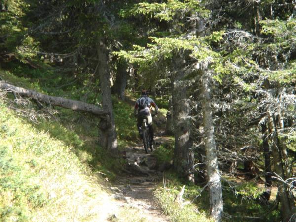 Další lesní trail
