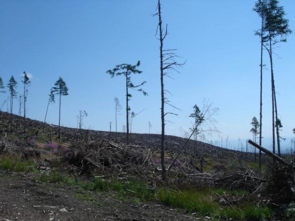 Jak to ale, že některé stromy zůstali stát?