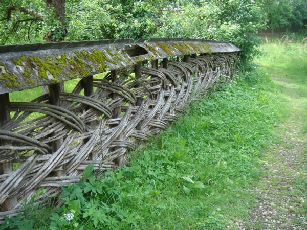 Pozoruhodný druh plotu.