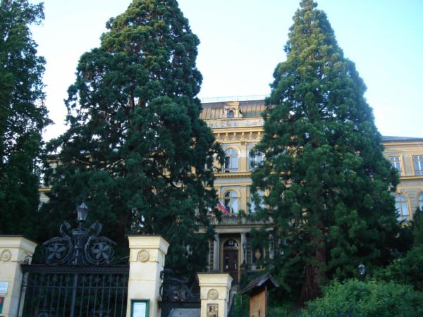 Objekt lesnické školy ve městě a neuvěřitelně veliké stromy.