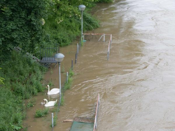 Spokojené labutě pod Štefánikovým mostem.