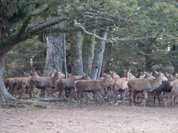 Jedeme okolo jelení farmy.