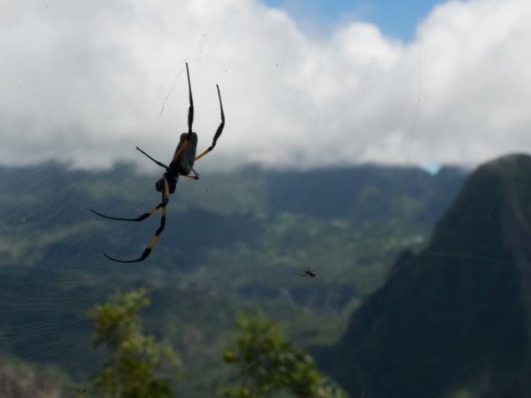 Zdejší pavoučci.