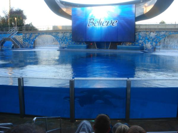 Kosatky na dně bazénu.