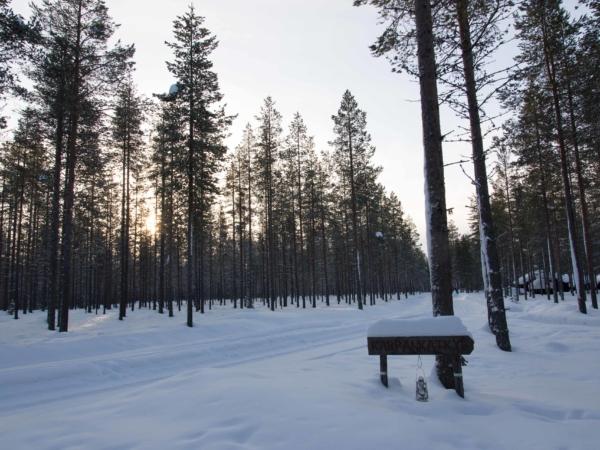 Stromy a placatá krajina kam oko dohlédne.