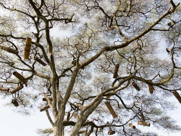 Včelí úly zavěšené na stromě.