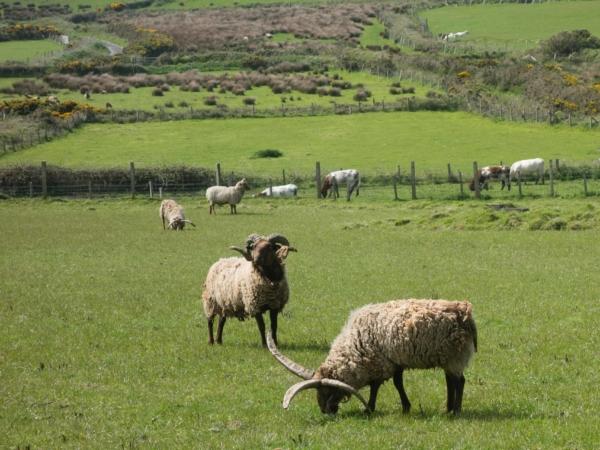 A v neposlední řadě čtyřroho ovce
