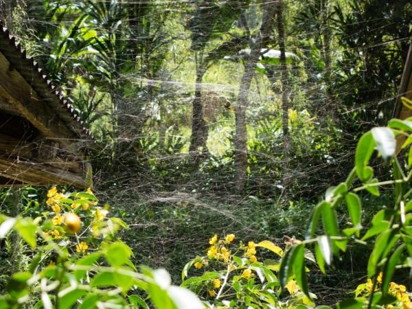 Je tu tak nějak všechno větší - pavučina přes 1 m2.