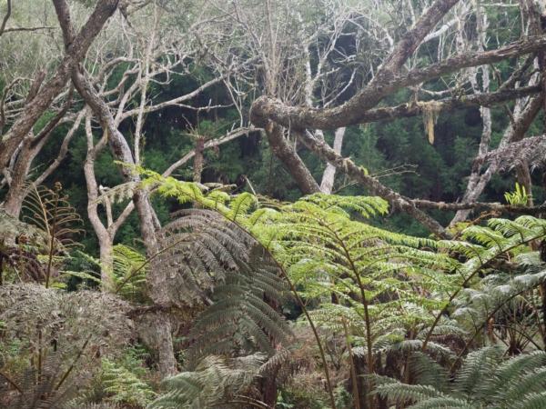 Lesní džungle na náhorní planině.
