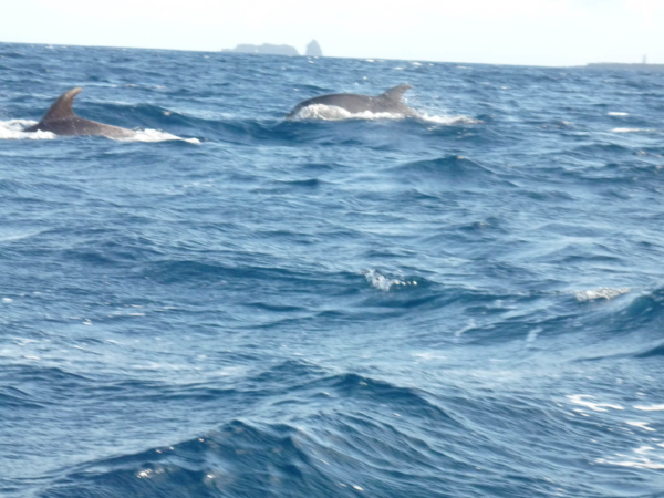 Delfíni.