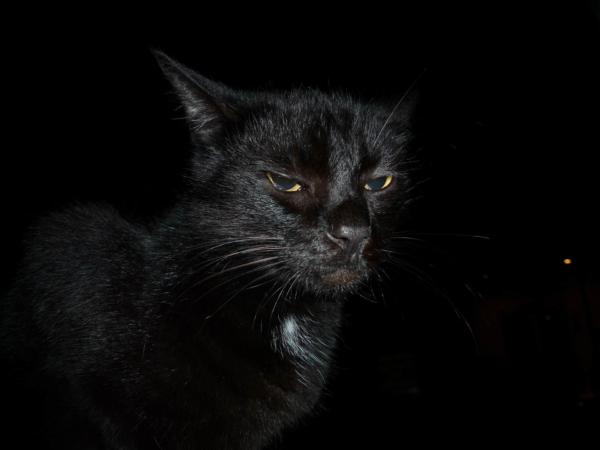 A toto je potomek po některé z jeho koček...