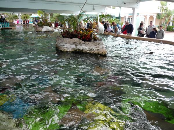 Desítky malých rejnoků krouží v mělkém bazénku přímo před vámi.