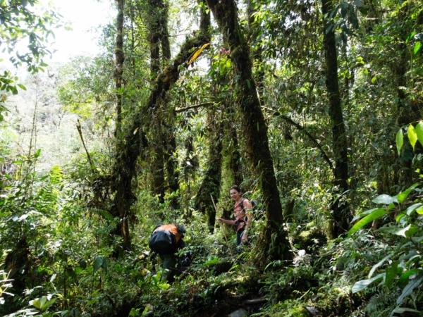 A vstupili jsme do džungle, kterou se budeme prosekávat dalších 8 dní...