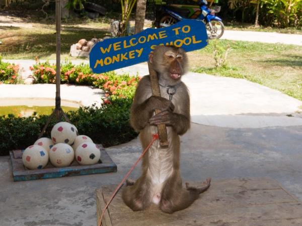 V opičí škole - děti byly nadšené...