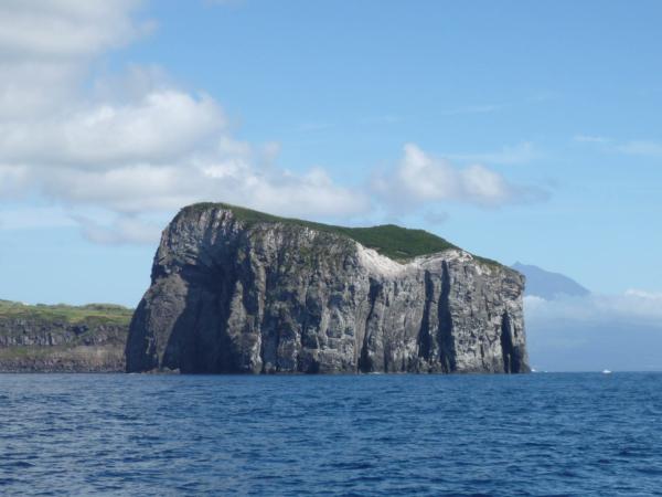 Osamocené skalisko u ostrova Faial. Jeho stěny byly dobře 100 m vysoké.