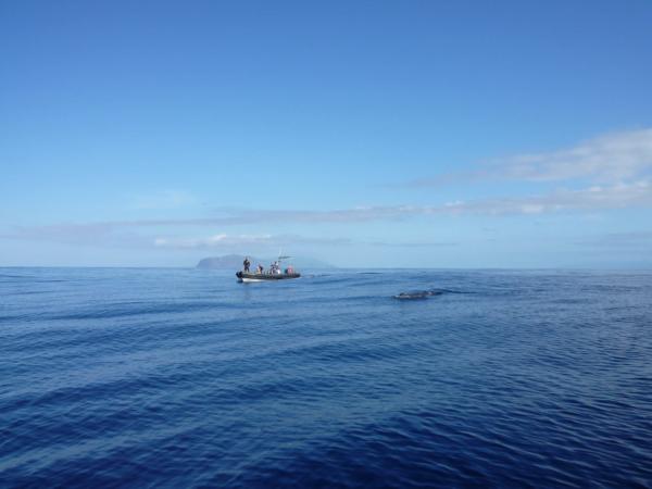 Vorvaň, náš druhý člun a moře jako zrcadlo.
