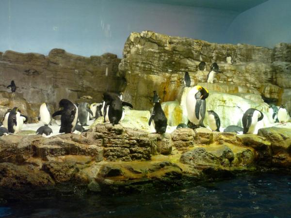 V pavilónu u tučňáků císařských.