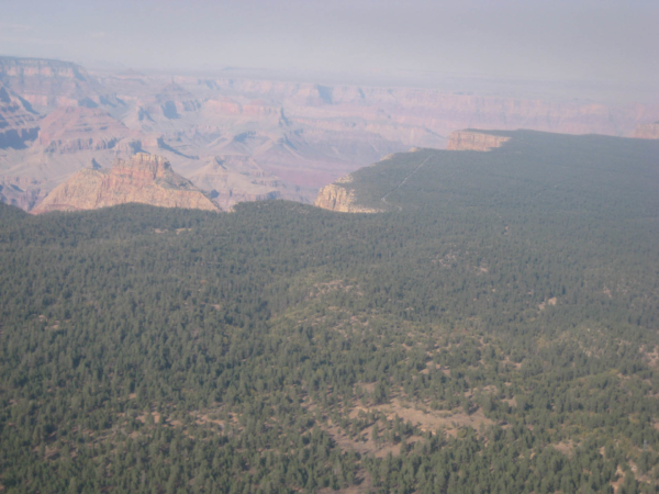 U hrany Grand Canyonu - v lese je vidět příjezdová silnice.