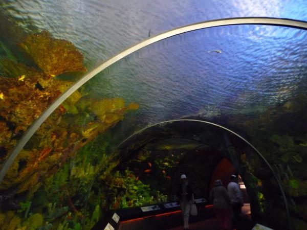 Pavilon se skleněným podvodním tunelem.