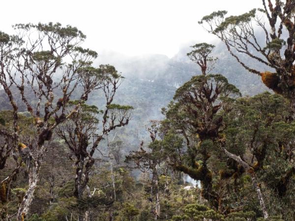 Řídnoucí džungle ve výšce téměř 3300 m.