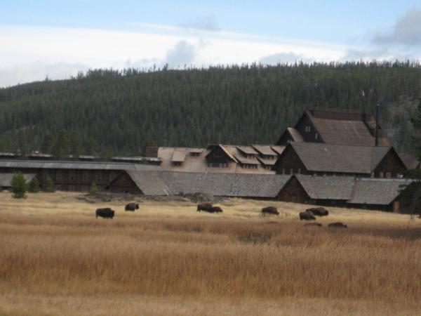 A za hotelem se pokojně pase stádečko bizonů...