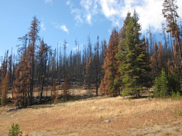 Cestou parkem míjíme takováto spáleniště - vypadá to docela čerstvě.