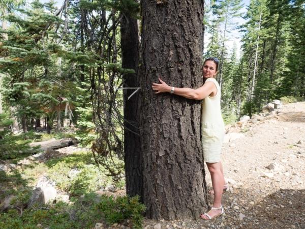 Stromy tu mají velké.