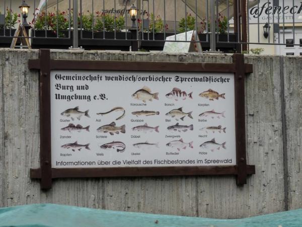 Německé ryby v v ramenech Sprévy.