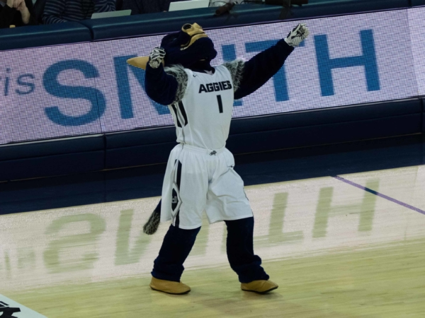 Býk - maskot Utah State University.