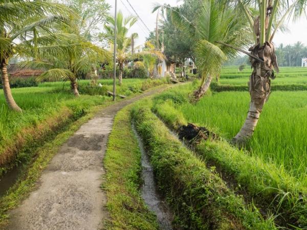 Všude jsou zavlažovací kanály. Rýže to potřebuje.