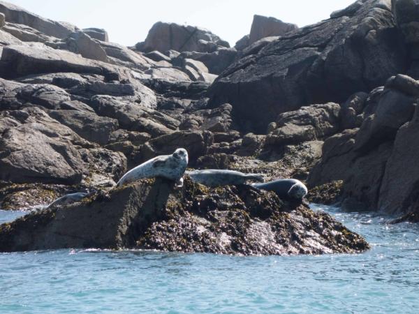 Z výletu na motorovém člunu za tuleni a papuchalky.