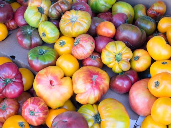 Různé druhy rajčat.