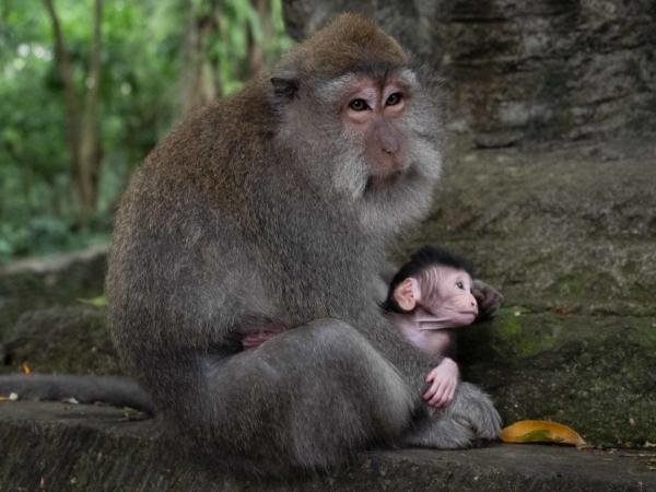 Monkey Forrest
