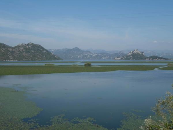 Mělký záliv Skhadarského jezera v Černé hoře.