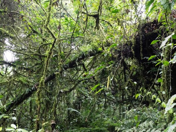 Okolní džungle. Najdete našeho na obrázku  rangera?