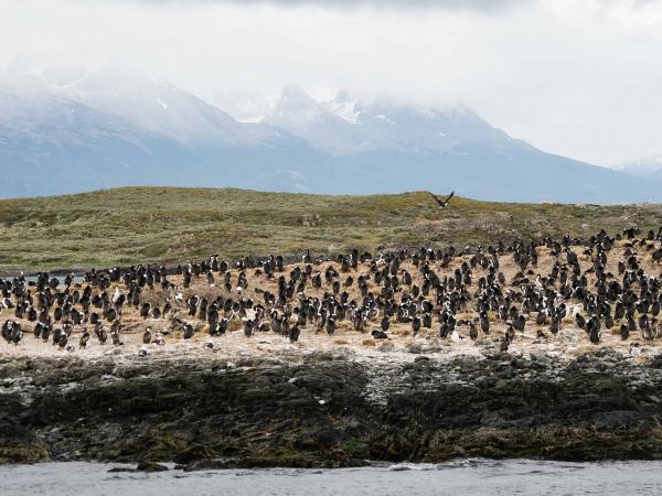 Zdejší ostrůvky jsou plné ptáků. V tomto případě kormoránů.
