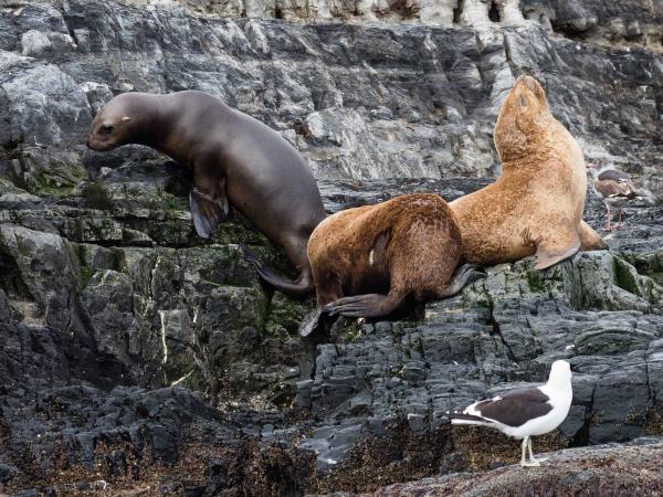 Ale i tuleňů.